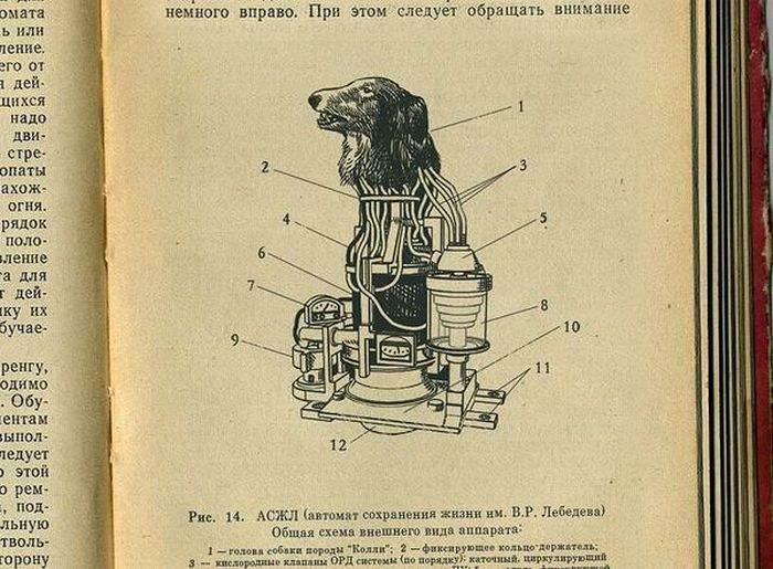 инструкция о прикреплении собачьей головы к автомату жизнеобеспечения